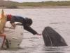 aj-touching-whale
